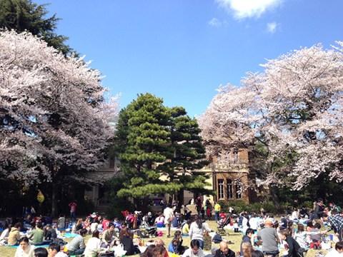 駒場公園の桜