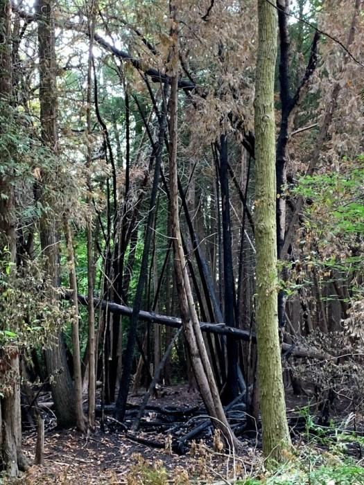 Maitland Woods Burned