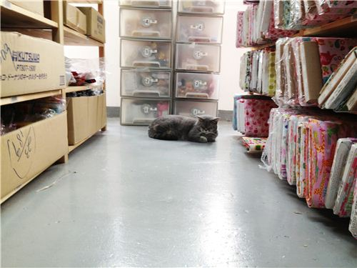 The cute cat sleeping (what else?) in one of our warehouse alleys