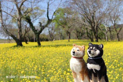 Image from Nakayama Midori