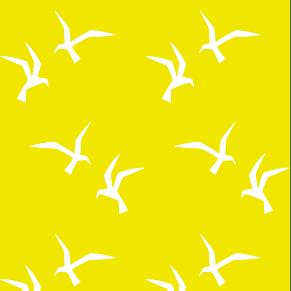 Seagulls yellow