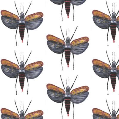 jackelien-insecten