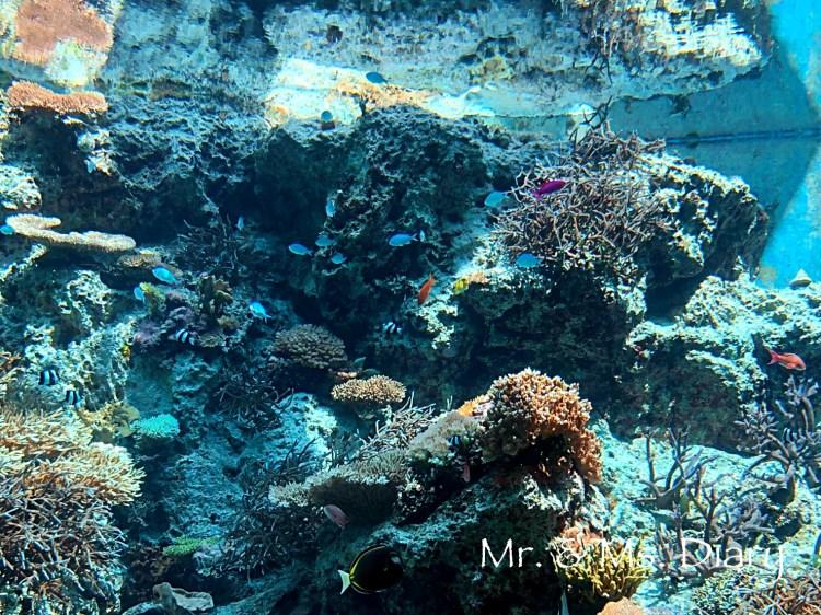 日本沖繩 4 天 3 夜旅遊規劃--瀨長島飯店、賞鯨、螃蟹吃到飽、海生館 24