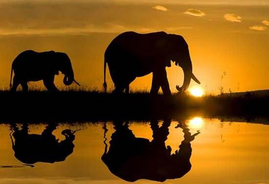 África: Tudo que você precisa saber para viajar pra lá