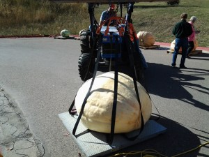 Weighing the Montana pumpkins