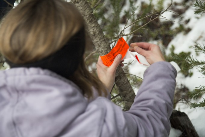Attaching the Christmas tree permit