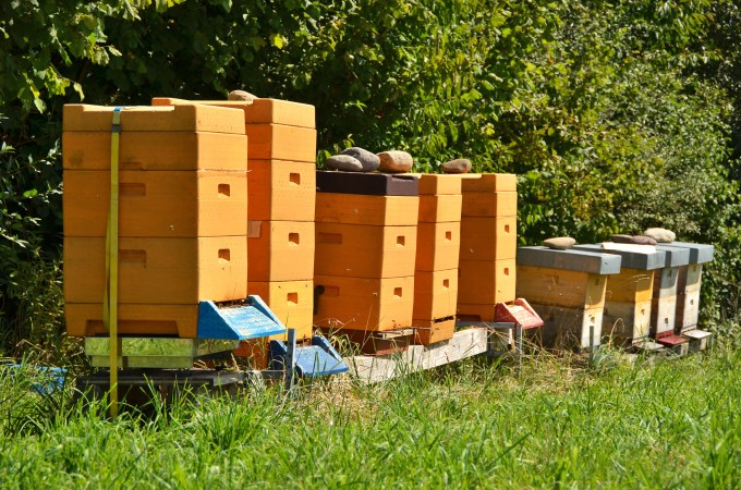apiary blocked by hedges