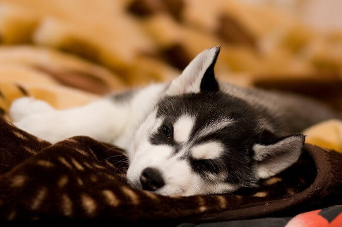 Puppies need 25% to 30% protein in their diet.