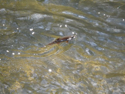 Brook Trout Fly Fishing