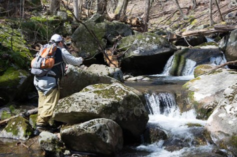 The mountain trout streams are excellent this time of year in the Blue Ridge Mountains. Be sure to have your map with you when you leave the trail head to go into the stream.