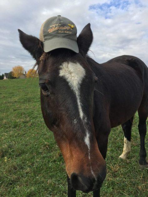 Horseplay - Happy New Year