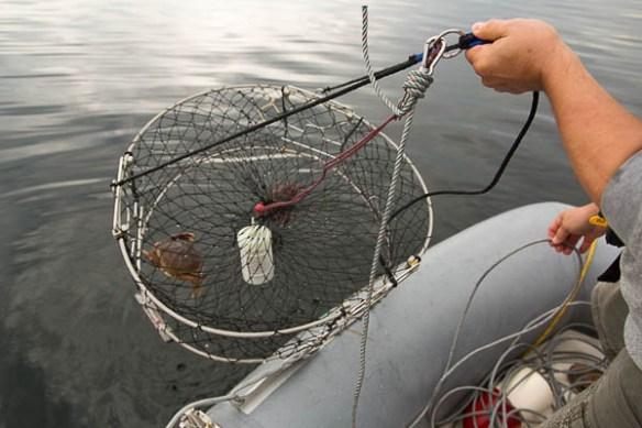 mv Archimedes crab catch