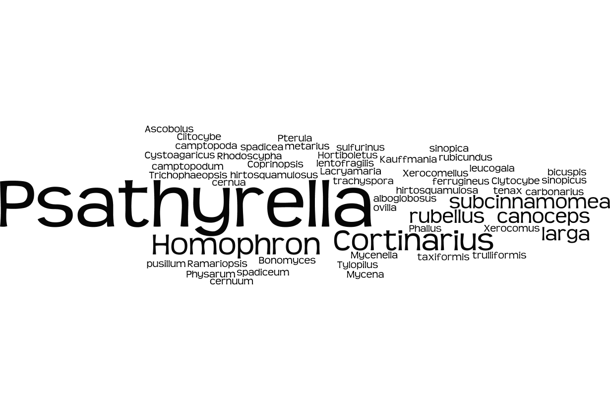 Nom de champignons (juin 2015)