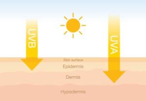 how UV rays from the sun go through skin