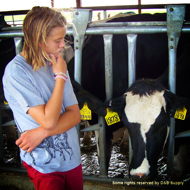 Emily looking at a cow
