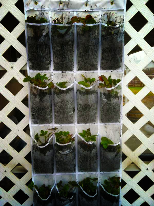 Recycled Shoe hanger into planter