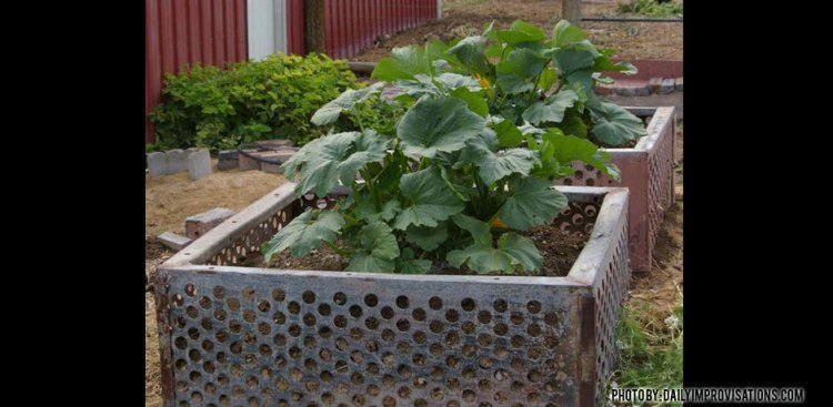 02082016_junk-yard-garden-zucchini-raised-beds