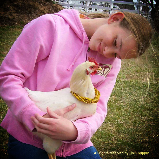 Chicken and a Girl