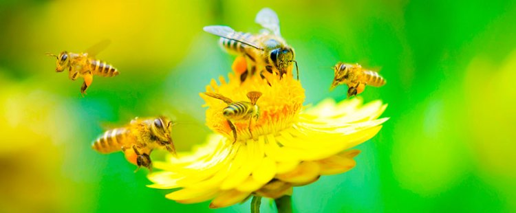 011314-bees