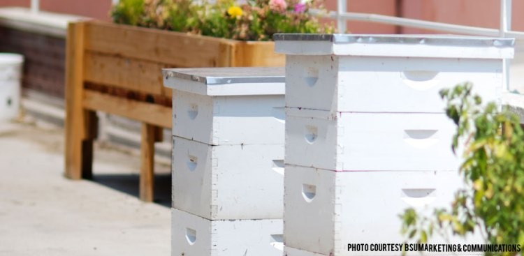 041615_bees