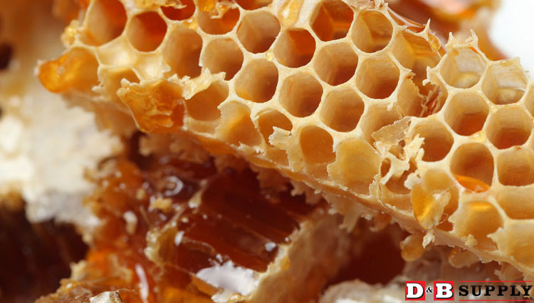 111415_beeswax-featured