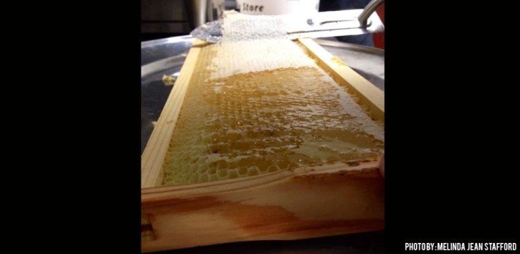 08102016_hot-knife-on-a-bee-frame