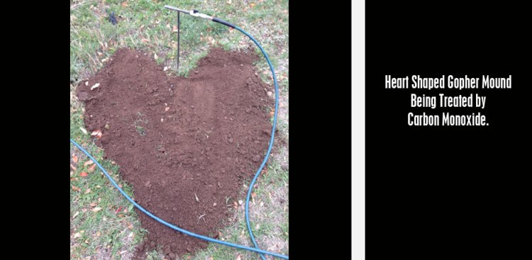 06092017_Heart-Shaped-Gopher-Mound-Being-Treated-by-Carbon-Monoxide.