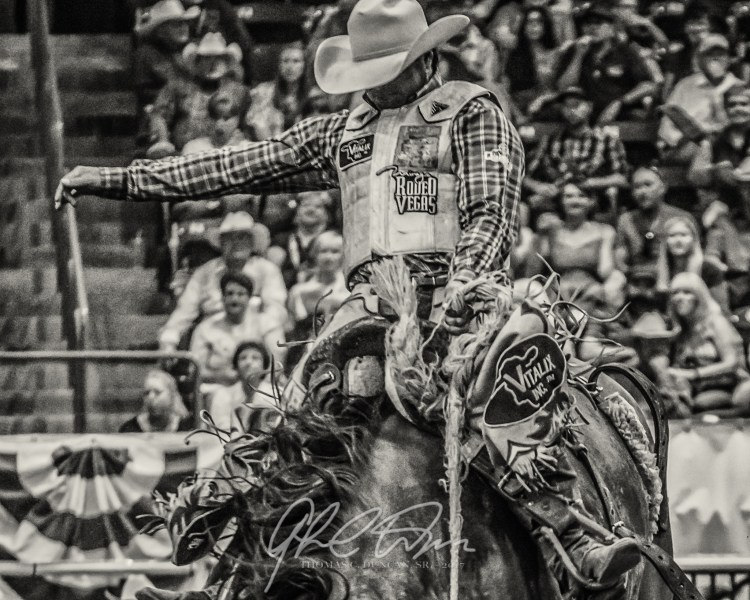 Bucking Broncs by Thomas C Duncan