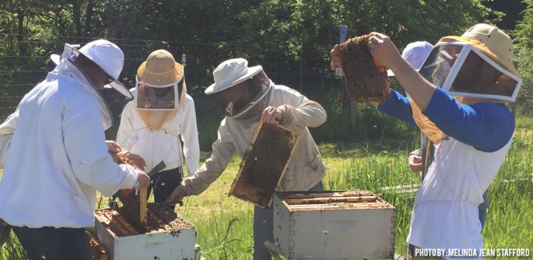 11282017_beekeeping-what-are-your-questions-1