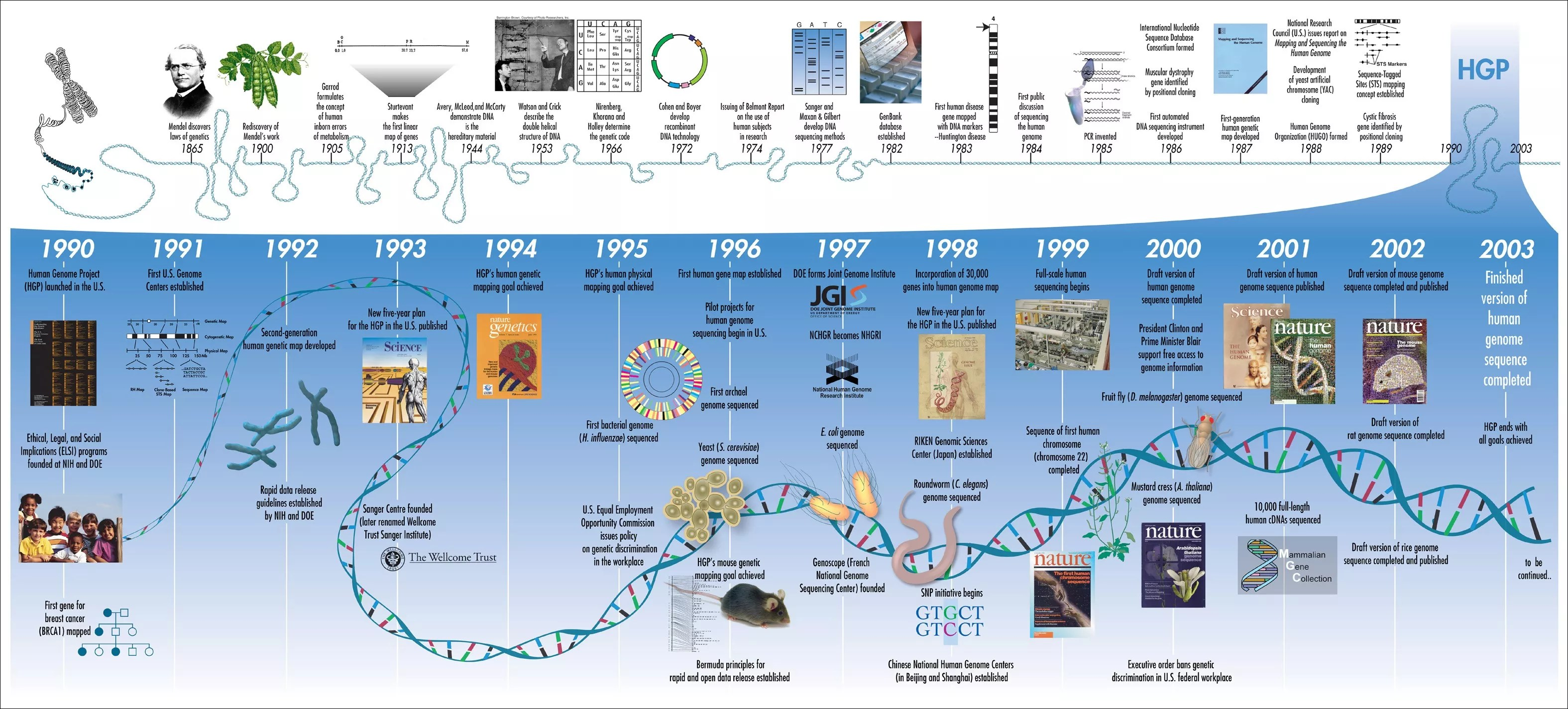 The Human Genome Project Timeline contains major milestones in genetic research from 1865 to 2003 [Credit: Human Genome Project Timeline]