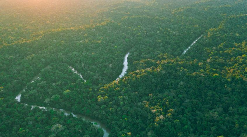View of the Amazon rainforest from the team's helicopter trip