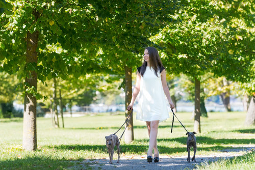 Woman walking 2 small dogs in a green park