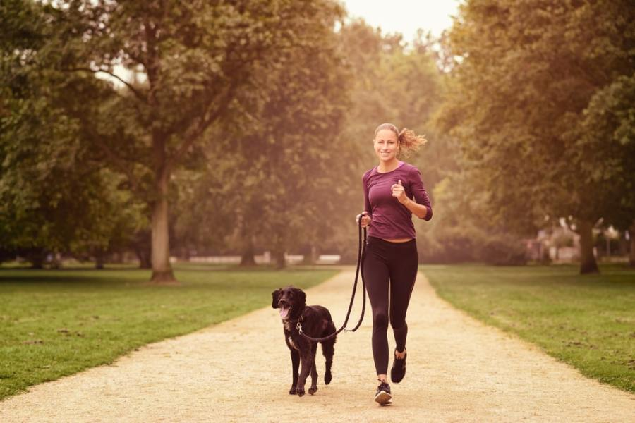 6 Ways Dog Walking Makes More Steps Fun and Easy (hit 10k!)