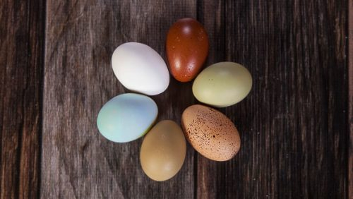 Eggs in many colors - use farm insurance