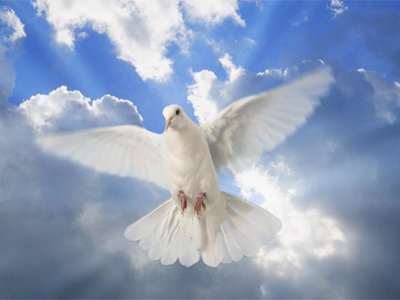 colombe de la paix pour prière de baptême