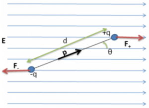 Torque on an Electric Dipole in a Uniform Electric Field