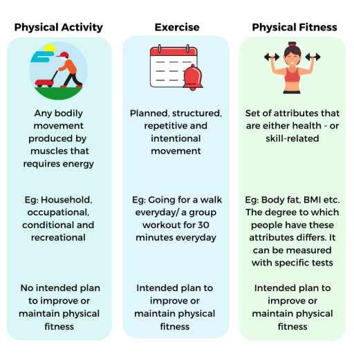 Describes the difference between physical activity, exercise and physical fitness.