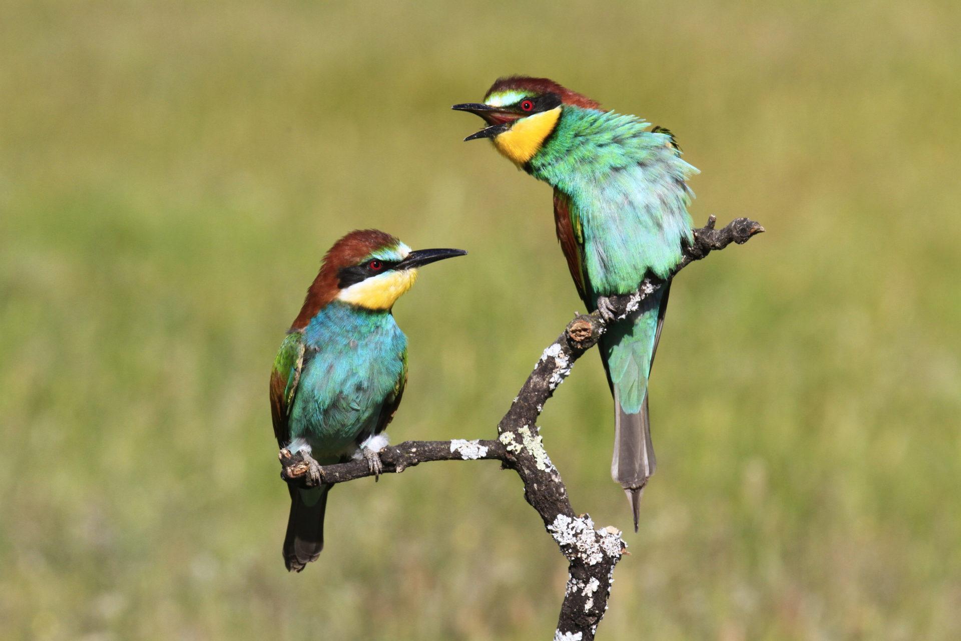 my singing birds hd