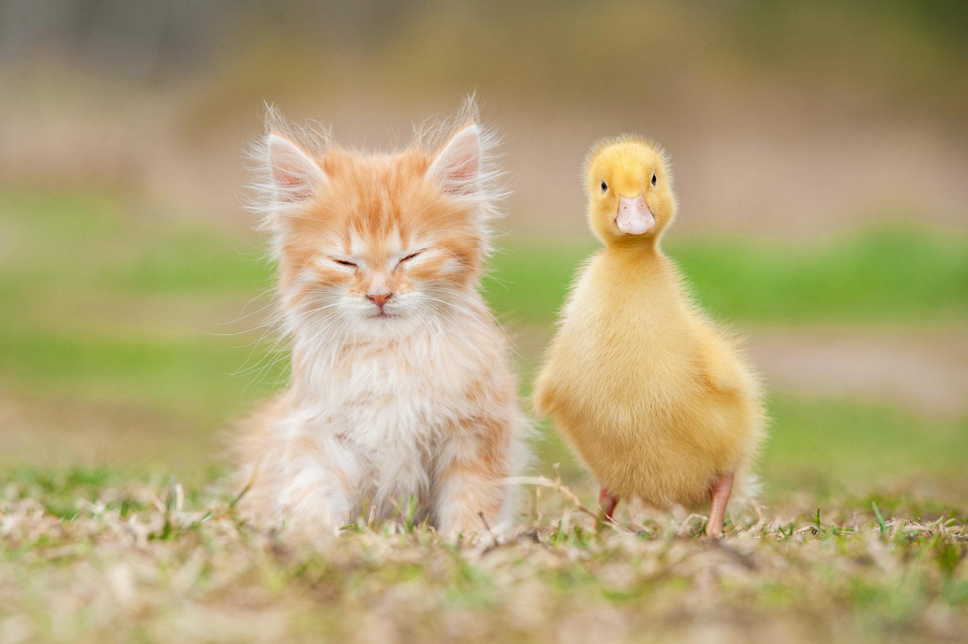 adorable baby animal facts