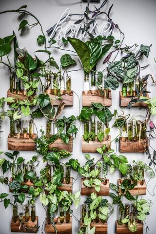 10 Plants Wall Decor Ideas For Your Home My Tasteful Space