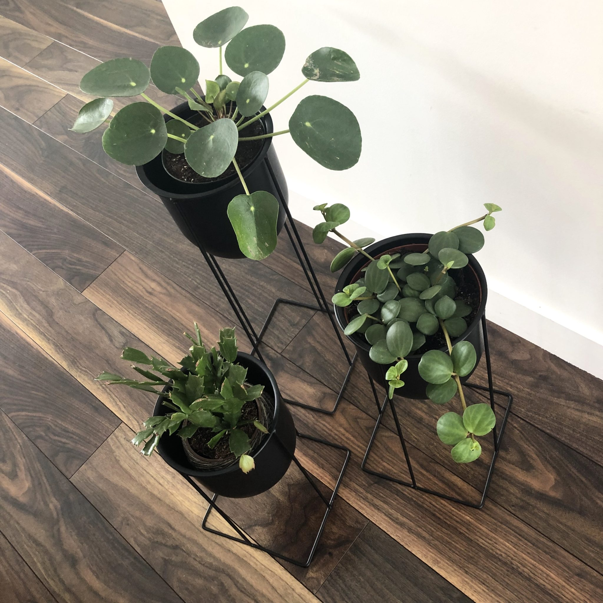 Unique Plant Stands Ideas for Your Home - My Tasteful Space on House Plant Stand Ideas  id=14487