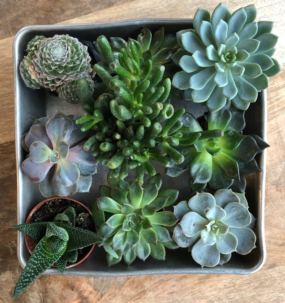 Succulent Arrangements For Your Table My Tasteful Space