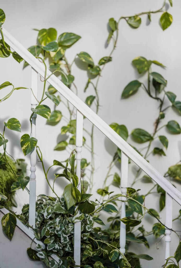 How to Choose Seasonal Climbing Plants