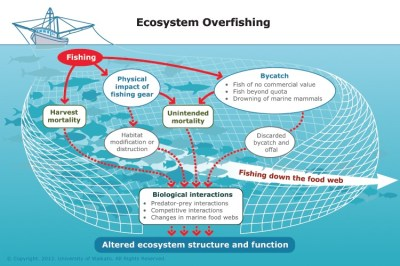 The effects of overfishing on our system