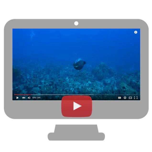 Juan Fernández fur seal video