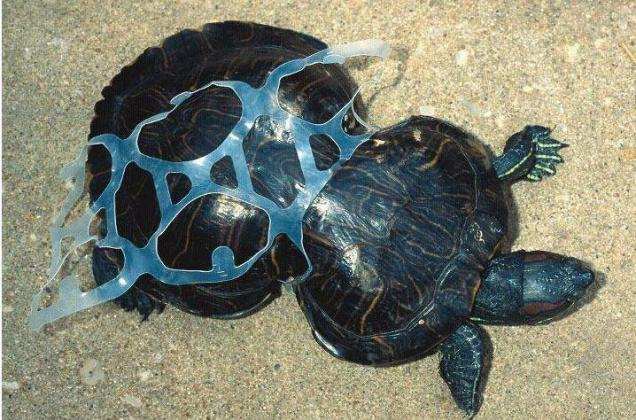plastic kills turtles