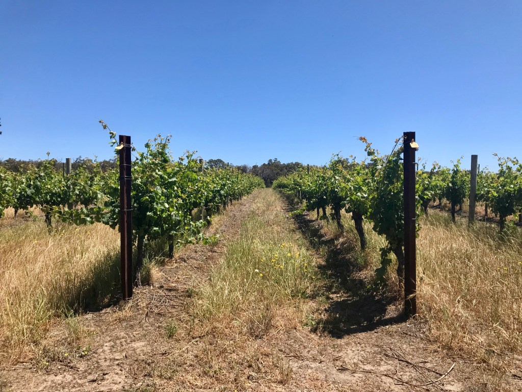 Margaret River Vines