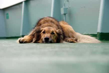 Dog * Feriry = Seasick - By Oliver Ruhm, Flickr