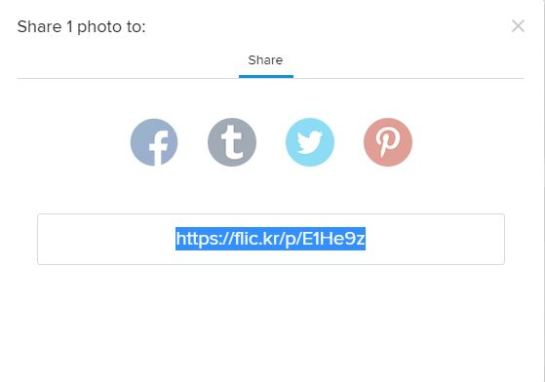 Flickr Share Panel: Share Only Image