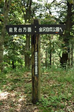 Kamariya_forest_05